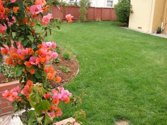 After- Lawn