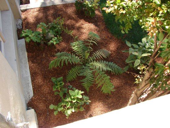 Landscaping with Tree Fern