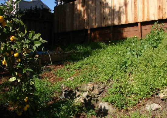 Overgrown Backyard Downslope