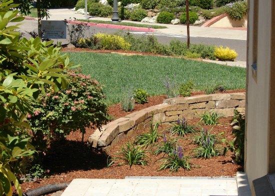 Regraded Front Yard Garden