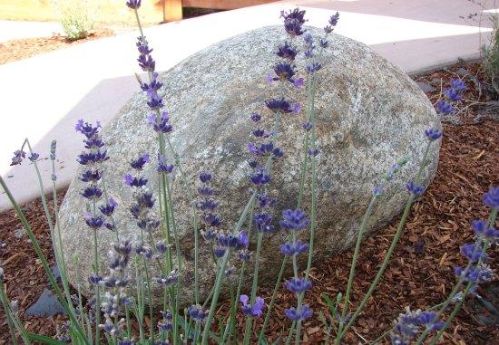 Stone Boulder Accent in Garden