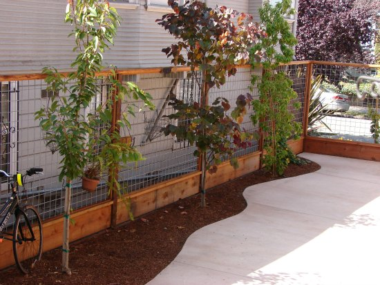 Hog Wire Fence with Screening Trees