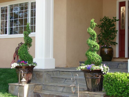 Topiary in Ceramic Planters at Entry